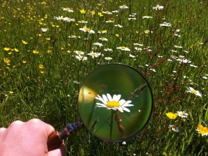 magnifying-glass-479742_1280